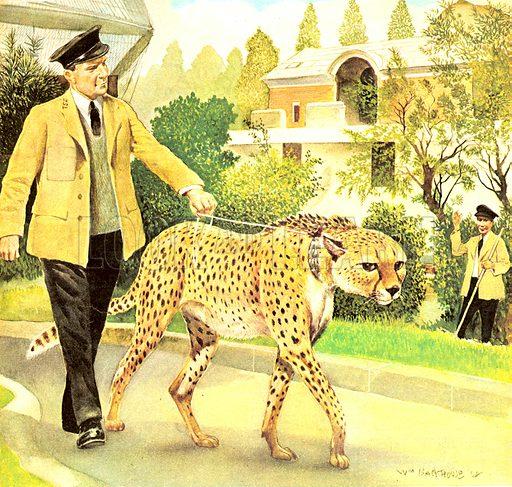Who's Who at the Zoo: Rabiu, the Dog-like Cat.