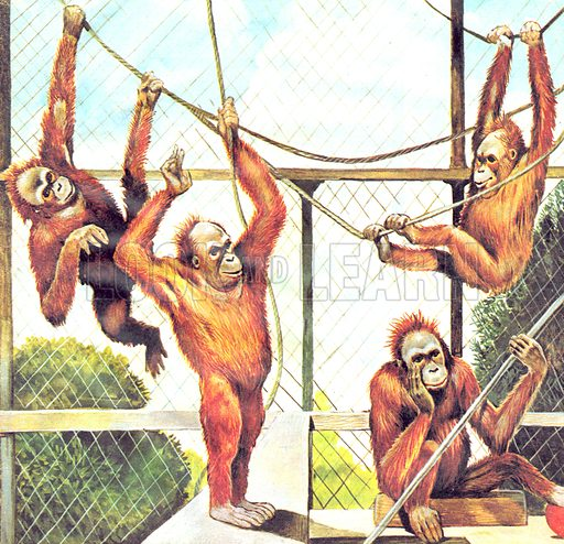 Who's Who in the Zoo: The Acrobats.