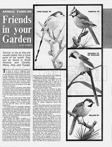 Animal Families: Friends in Your Garden.