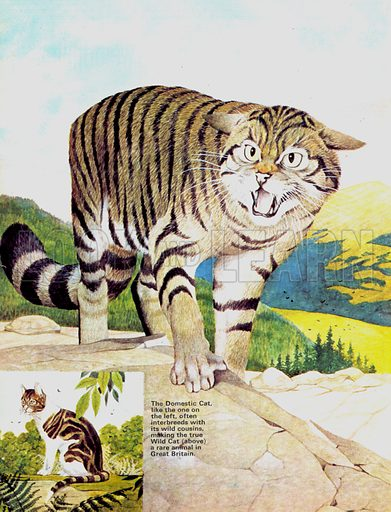 Animal Families: Cats -- Domestic and Wild.