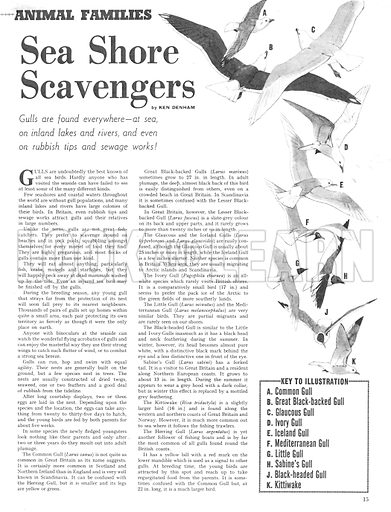 Animal Families: Sea Shore Scavengers.