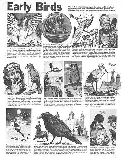 Early Birds.