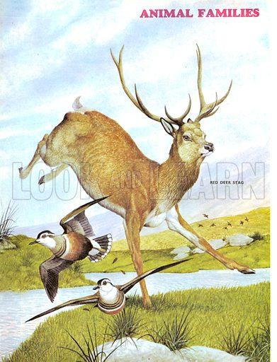 Animal Families: Deer Stalking!.