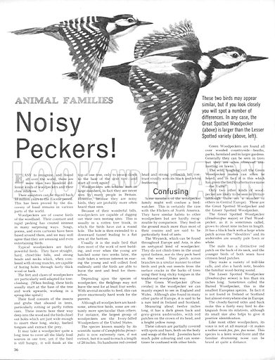 Animal Families: Noisy Peckers!.