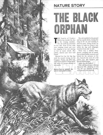 The Black Orphan.