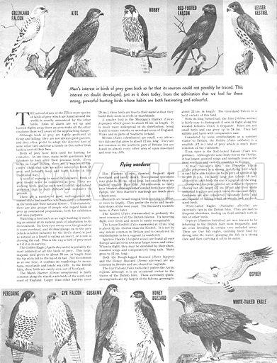 Animal Families: Birds of Prey.