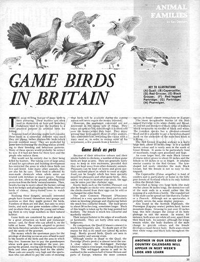 Animal Families: Game Birds in Britain.