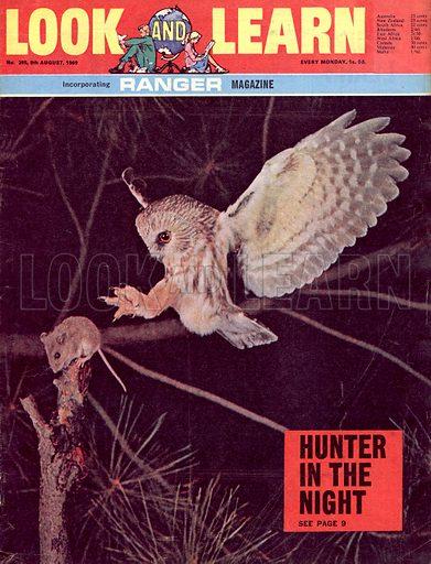 Hunter in the Night.