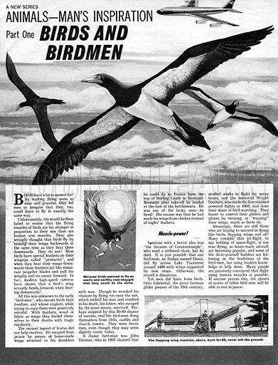 Animals - Man's Inspiration: Birds and Birdmen.