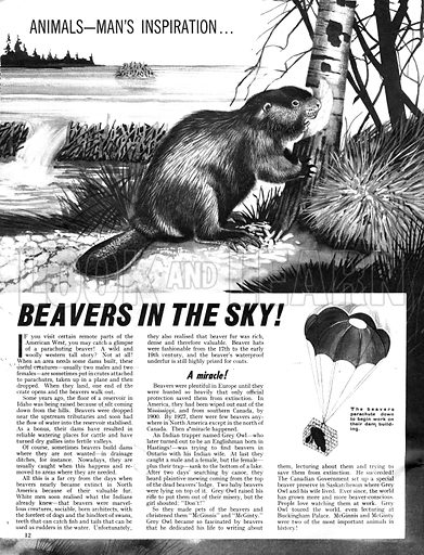 Animals -- Man's Inspiration: Beavers in the Sky!.