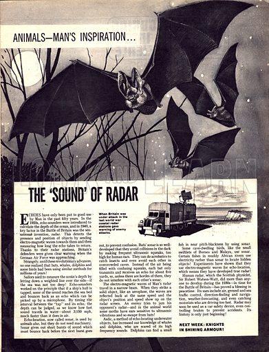 Animals -- Man's Inspiration: The 'Sound' of Radar.