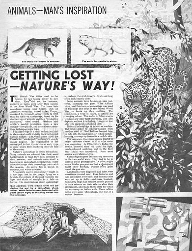 Animals -- Man's Inspiration: Getting Lost -- Nature's Way!.