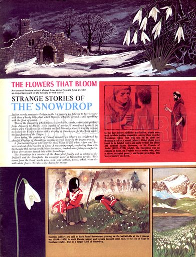 The Flowers That Bloom: Strange Stories of the Snowdrop.