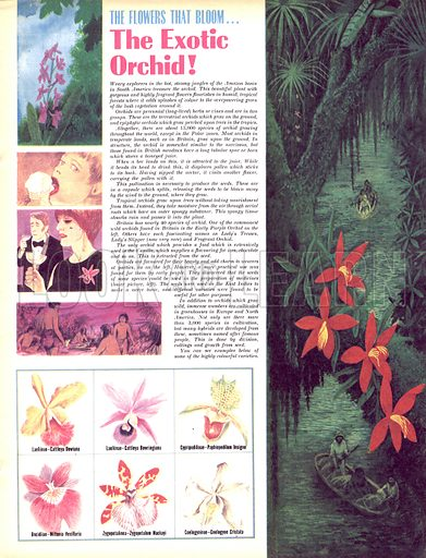 The Flowers That Bloom: The Exotic Orchid!.