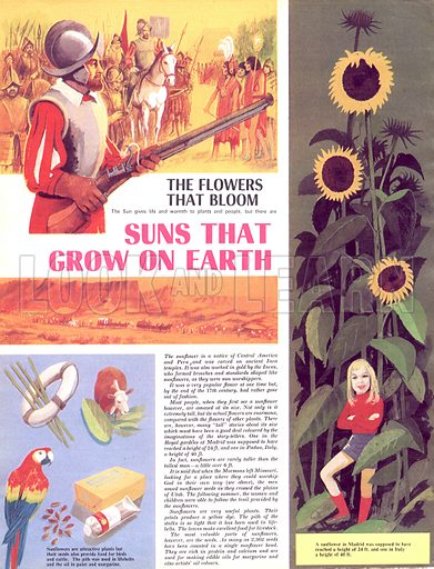 The Flowers That Bloom: Suns That Grow on Earth.