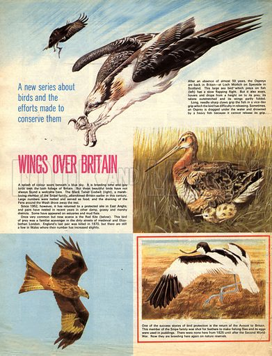 Wings Over Britain.