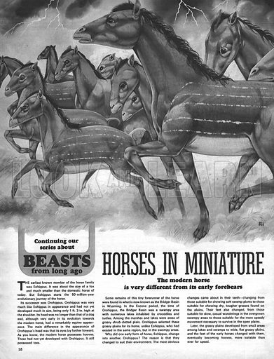 Beasts from Long Ago: Horses in Miniature.