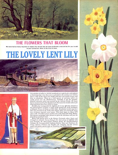 The Flowers That Bloom: The Lovely Lent Lily.