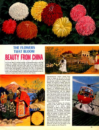 The Flowers That Bloom: Beauty from China.