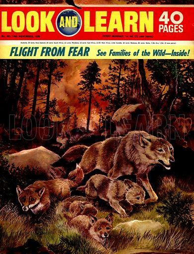 Families of the Wild: Flight from Fear.