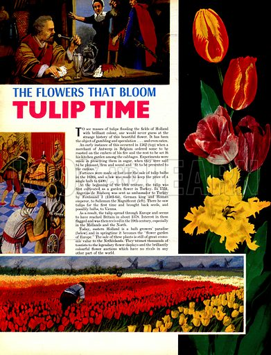 The Flowers That Bloom: Tulip Time.