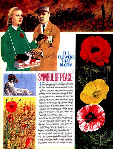 The Flowers That Bloom: Symbol of Peace.