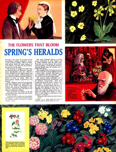 The Flowers That Bloom: Spring's Heralds.