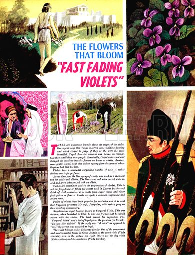 """The Flowers That Bloom: """"Fast Fading Violets""""."""