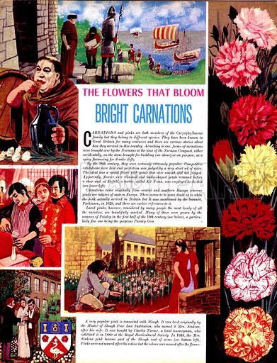 The Flowers That Bloom: Bright Carnations. Carnations and pinks and both members of the Caryophyllaceae family but they belong to different species.  They have been known in Great Britain for many centuries and there are various stories about how they arrived in the country.