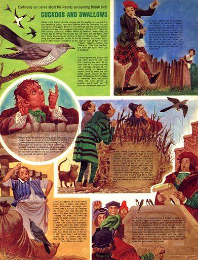 Legends Surrounding British Birds: Cuckoos and Swallows.