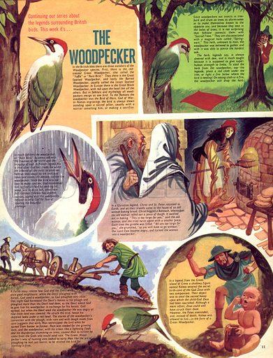Legends Surrounding British Birds: The Woodpecker.
