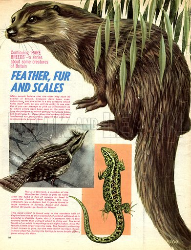 Rare Breeds: Feather, Fur and Scales.
