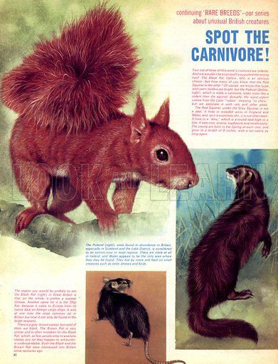 Rare Breeds: Spot the Carnivore!.