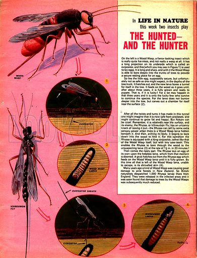 Life in Nature: The Hunted -- and the Hunter.