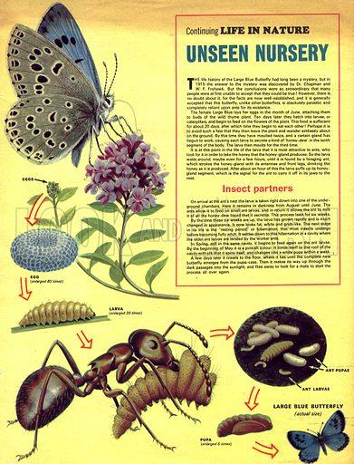 Life in Nature: Unseen Nursery.