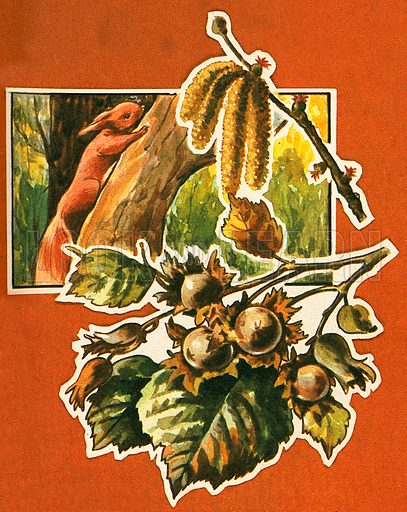 Squirrels collect these Hazel nuts and store them for food during the winter. Before the leaves appear, the branches bear tassels called catkins.