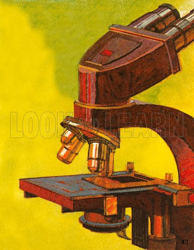 The microscope is a very useful scientific instrument that enables us to see microscopic things that cannot be seen with the naked eye. Anton van Leeuwenhook  was the father of microbiology who crated hundreds of different microscopes in the 17th century.