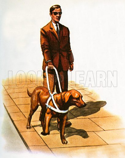 guide dog, picture, image, illustration