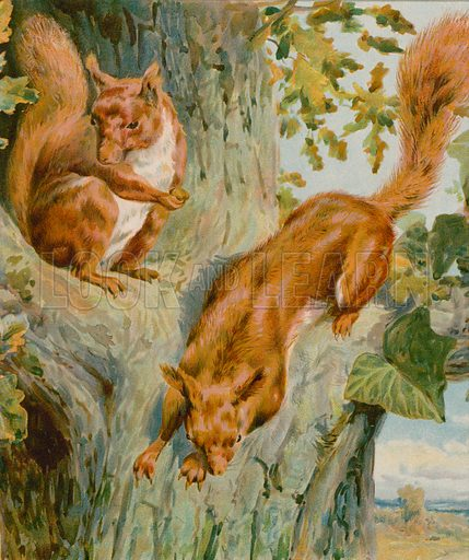 Squirrel's Home. Illustration for Picture Book Playmates (Ernest Nister, c 1890). Chromolithograph.