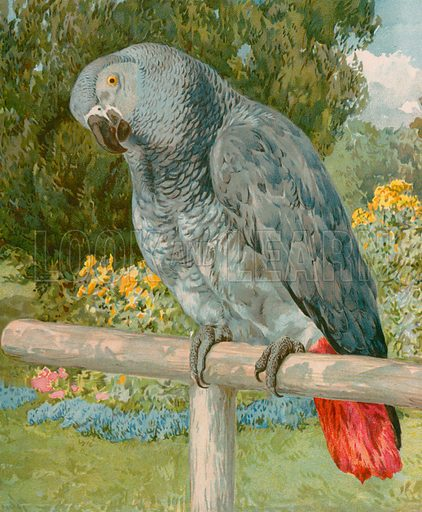 Pretty Polly. Illustration for Picture Book Playmates (Ernest Nister, c 1890). Chromolithograph.