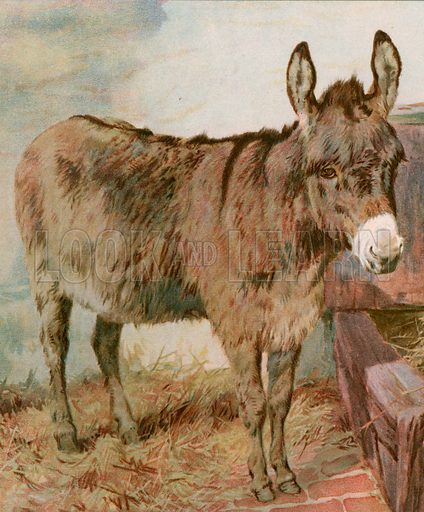 Dear Old Neddy. Illustration for Picture Book Playmates (Ernest Nister, c 1890). Chromolithograph.