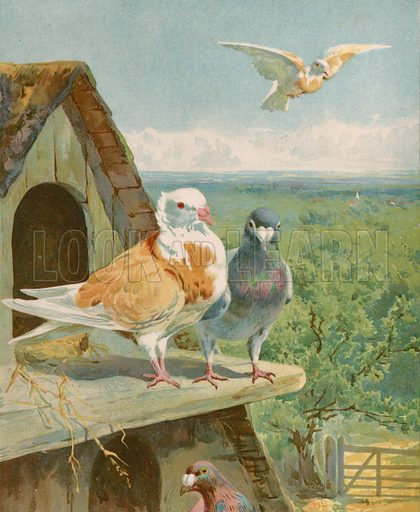 Pretty pigeons. Illustration for Picture Book Playmates (Ernest Nister, c 1890). Chromolithograph.
