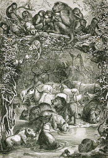 Mammalia. Engraving from JG Wood's Illustrated Natural History (c 1850).