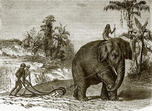 Working elephant in Ceylon. All Round the World, First Series (1868).