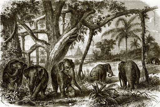 A forest in Ceylon. All Round the World, First Series (1868).