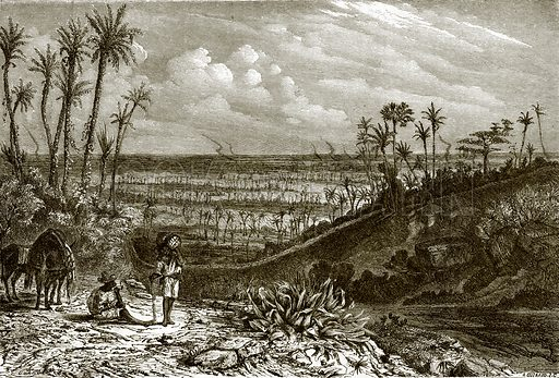Landscape in the island of Cuba. All Round the World, First Series (1868).