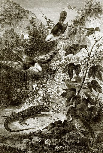 Birds, reptiles, and vegetation. All Round the World, First Series (1868).