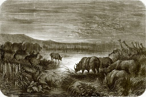 A pond in Africa at night. All Round the World, First Series (1868).