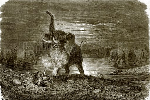 Hunter and elephant. All Round the World, First Series (1868).