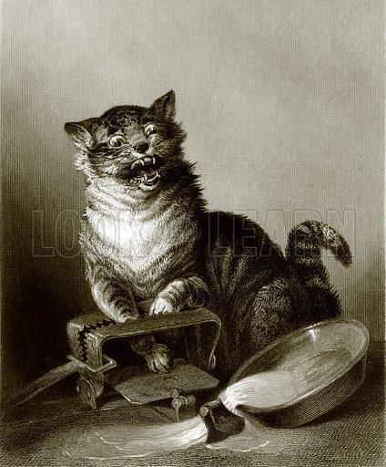 A catastrophe. Payne's Universum (1847).